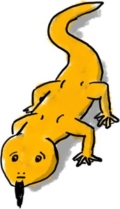 Fabian as a newt